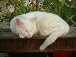 Cómo deshacerse de los parásitos en los gatos