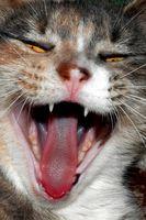 ¿Por qué un gato está orinando sobre las personas y cosas