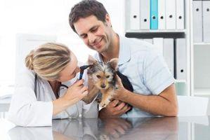 Como prueba de audición de su perro