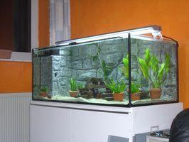 Tipos de algas en el acuario de cristal