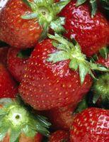 Cómo cortar y congelar las fresas