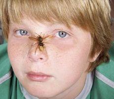 La identificación de escozor avispas