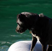 Problemas con un sistema de seguimiento de perro con GPS RoamEO Classic