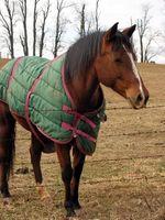 Cómo reparar una manta de caballo