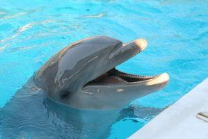 Lugares en Miami, Florida, para nadar con delfines