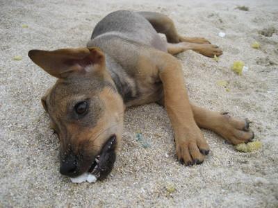 Hoteles que admiten perros cerca de Big Sur, California