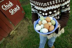 Cómo hacer delicioso Huevos rellenos con tocino