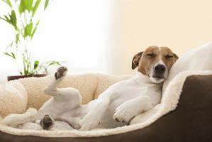 La enfermedad de Parkinson Canine