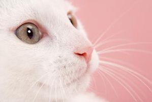 Los gatos pueden Sense desastres naturales?