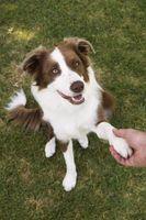 Cómo envolver la pata de un perro