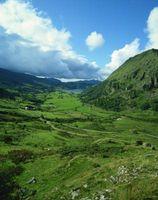 Welsh son buenas mazorcas caballos de la montaña?