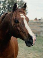 Cómo eliminar el tejido cicatricial en caballos
