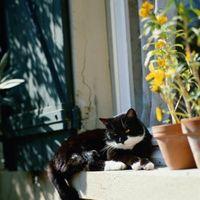 Cómo mantener su gato de la masticación Casa de las plantas