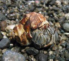 ¿Cómo deshacerse de las pulgas en los cangrejos ermitaños