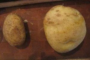 Forma de guardar patatas Kennebec