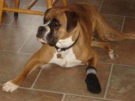 Problemas en los pies del perro