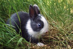 Una infección urinaria en un conejo