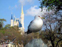 Contemporary Resort en Walt Disney World en Florida