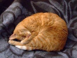 Olmo resbaladizo para gatos