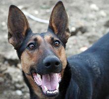 Los tipos de cáncer de hueso en los perros
