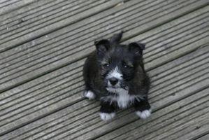Sobredosis praziquantel en los perros