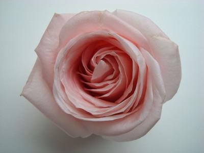 Cómo hacer rosas Fuera de Jolly Ganaderos de caramelo