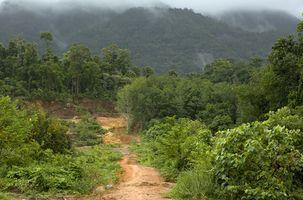 Sobre Especies ser una especie amenazada en la selva tropical tropical