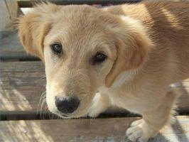 Suplementos para perros con cáncer de vejiga