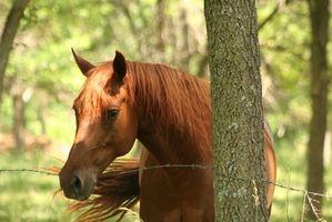 Cómo dar un caballo de mal sabor Medicina