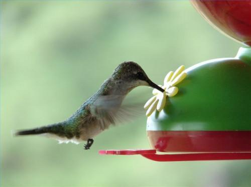 Cuando para acabar con Hummingbird Feeders