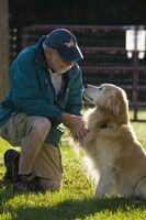Cómo cuidar de los perros con caderas Bad
