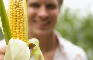 Cómo detener Corn De Conseguir agusanado
