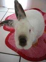 Juguetes conejo de bricolaje