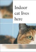Cómo cuidar de un gato de interior