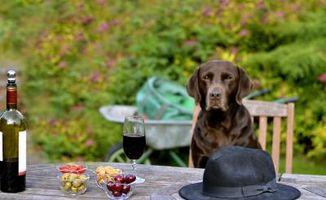 ¿Por qué no los perros comen las aceitunas negras?