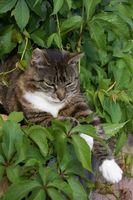 Las plantas con hojas que son perjudiciales para los gatos