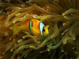 Panama Dive Resorts