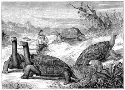 Características físicas de la tortuga gigante