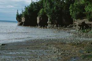 Dog-friendly sitios de camping en el Parque Nacional Fundy