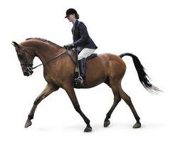 Cómo redondear el lomo de un caballo
