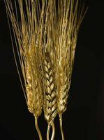 Cómo cocer al horno con las bayas de trigo