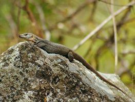 ¿Qué alimentos Qué comen los reptiles?