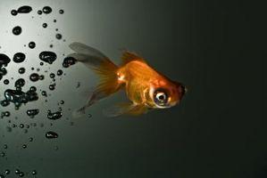 Cómo mantener a su pez vivo en un viaje largo
