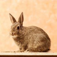 ¿Cómo de entrenar a un conejo con arena para gatos