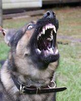 Cómo manejar un perro agresivo