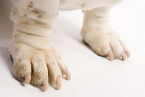 El propósito del Rocío de la garra de los perros