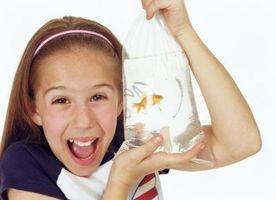 ¿Cómo puede la Feria Goldfish crecer grande?