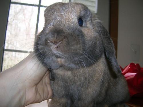 Cómo dar un conejo de un baño