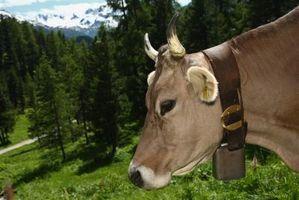 Brown los regalos del tema de la vaca suiza