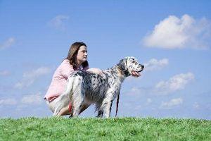 ¿Qué precauciones deben tomar los humanos con los perros con los gusanos?